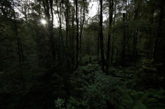 Kieran Rae Otway Rainforest Jungle Victoria Australia