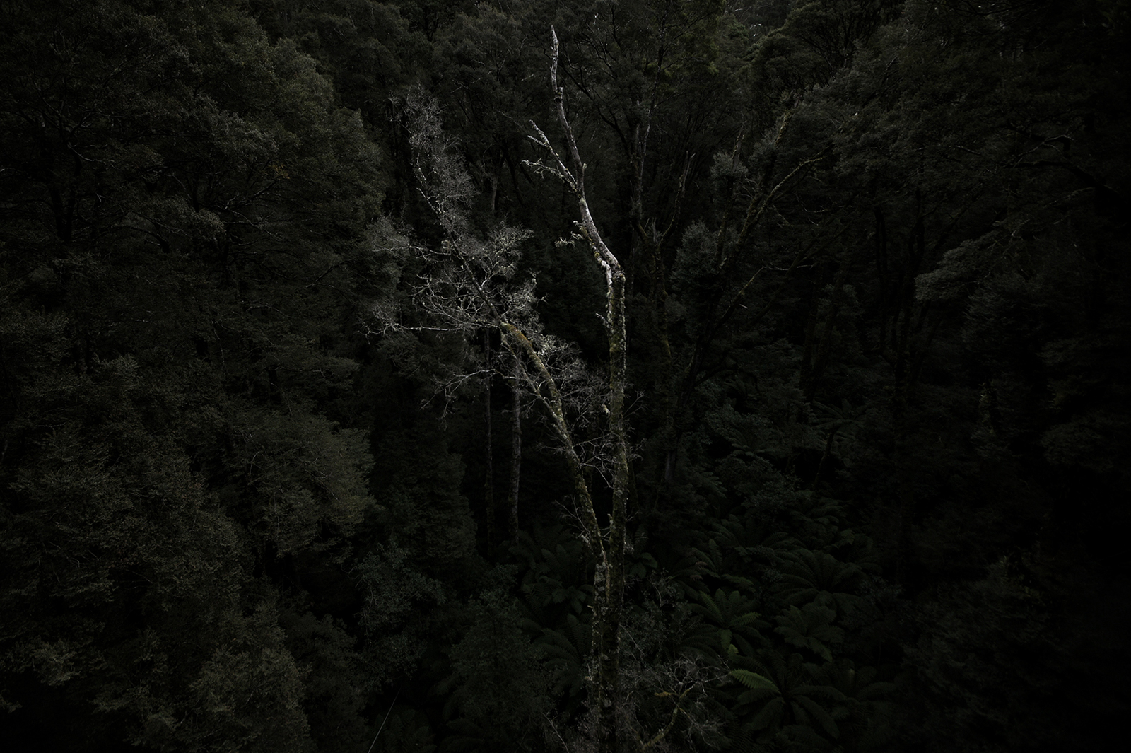 Kieran Rae Otway Rainforest Jungle Victoria Australia