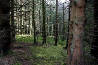 Kieran Rae West Highland Way Wood Scotland