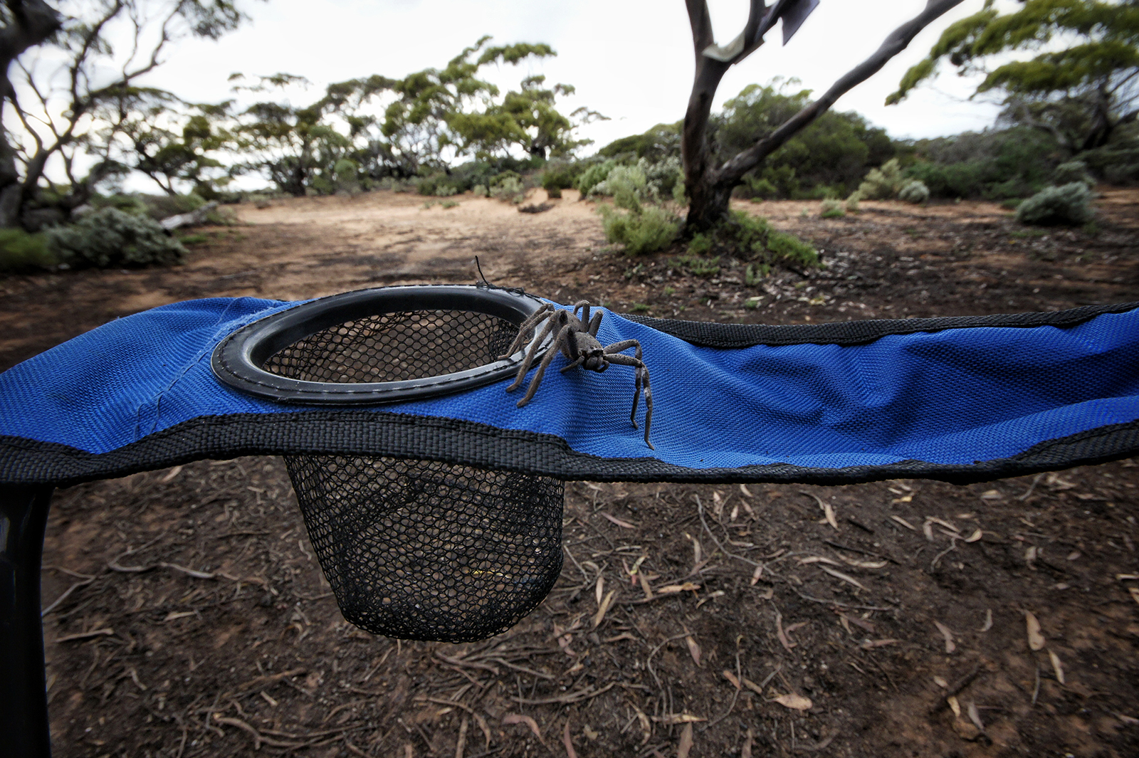 Kieran Rae Borderwalk Outback Australia Spider Huntsman Camping