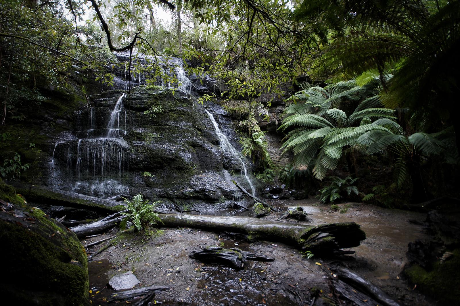 Kieran Rae Otway Rainforest Jungle Waterfall Henderson Falls Victoria Australia