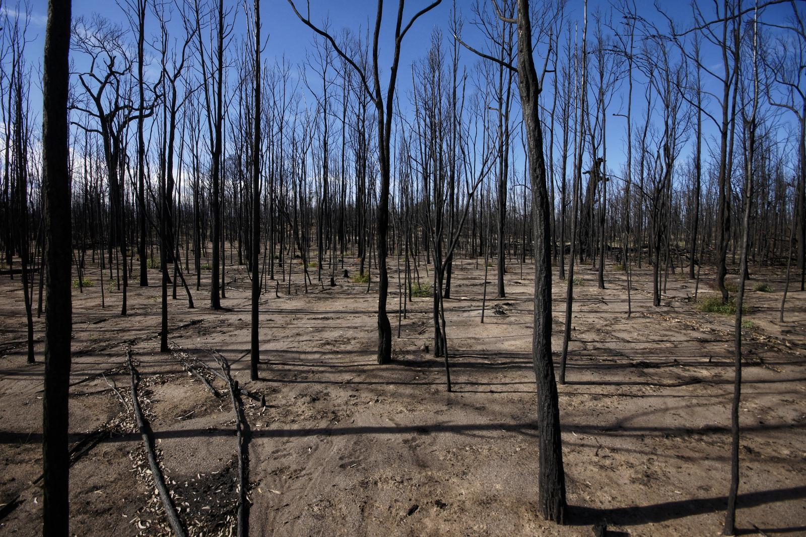 Kieran Rae Borderwalk Australia Outback Wildfire Bushfire