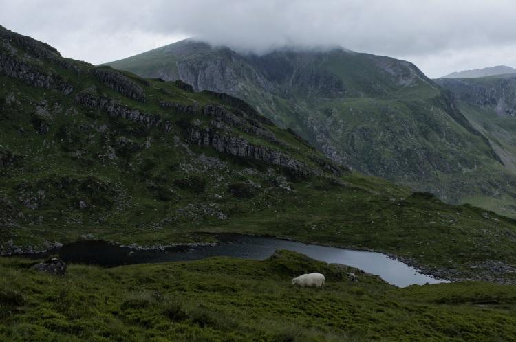 Kieran Rae Wales Tryfan Glyderau Glyder Snowdonia Sheep